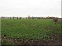 NZ2173 : Arable land east of Dinnington by Graham Robson