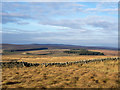 NY7449 : Wall crossing moorland on Hard Rigg by Trevor Littlewood