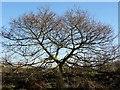SD6915 : Spared the woodman's axe by Philip Platt