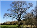 NZ0954 : Winter tree by Robert Graham