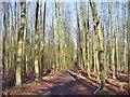 TQ0450 : West Clandon - Woodland by Colin Smith