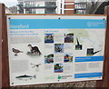 SO5039 : River Wye information board, Hereford by Jaggery
