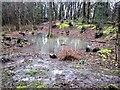 TQ7819 : Flood in Killingan Wood by Patrick Roper
