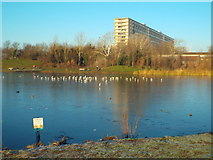TQ3377 : Ice on the lake, Burgess Park by Malc McDonald