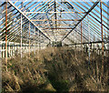 TG2809 : 1950s greenhouse (interior) by Evelyn Simak