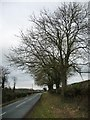 SE4448 : Winter trees, Hall Park Road by Christine Johnstone