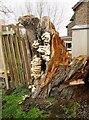 TA0751 : Tree  at  Swing  Bridge  Cottage by Martin Dawes
