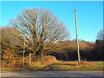 TQ4251 : The Greensand Way at Limpsfield Chart by Malc McDonald