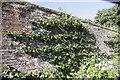 SU5927 : On the Garden Wall by Bill Nicholls