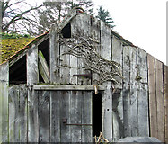 TG2909 : Gable end of an old shed by Evelyn Simak