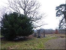 TQ0241 : St Andrew, Grafham: churchyard (b) by Basher Eyre