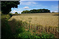 ST7964 : Wheat field near Bay's Farm by Bill Boaden