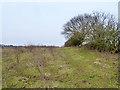 TQ4993 : Bushy field, Hainault Forest by Robin Webster