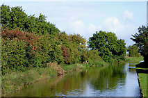 SJ6541 : Shropshire Union Canal by Coxbank in Cheshire by Roger  Kidd