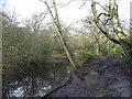TQ4093 : Part of Buxton's Pond in Knighton Wood by Marathon