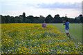 SP2964 : Enjoying the wildflowers, St Nicholas Park, Warwick, 2016 by Robin Stott