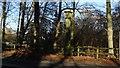 SJ8778 : Mottram Cross, Mottram St Andrew by Colin Park