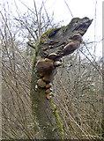 ST6470 : A beast in Bickley Wood by Neil Owen