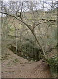ST6470 : A cleft in Bickley Wood by Neil Owen