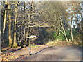 TQ4352 : Greensand Way near Westerham by Malc McDonald