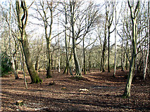 TG2202 : Wood on Dunston Common by Evelyn Simak