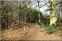 TG2202 : Footpath marker on Dunston Common by Evelyn Simak