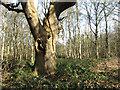 TG2202 : A bramble patch on Dunston Common by Evelyn Simak