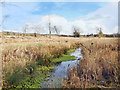 SU8888 : The Spade Oak Brook by Des Blenkinsopp