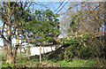 SP9111 : A Dangerous Fallen Tree on Goldfield by Chris Reynolds
