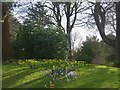 ST3087 : Daffodils and crocuses, Belle Vue Park, Newport by Robin Drayton