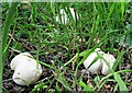 TQ7818 : St. George's mushrooms, Churchland Lane by Patrick Roper