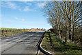NZ3243 : Minor road north-east of Pittington Bridge by Trevor Littlewood