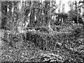 TG2004 : Remains of a WW2 RASC camp by Evelyn Simak