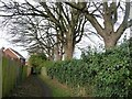 NZ3762 : Trees along the footpath to Boldon Lane, Cleadon by Christine Johnstone