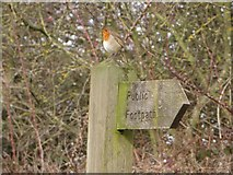 NZ2288 : Robin perched on a signpost, Longhirst by Graham Robson