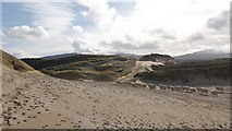 NC3970 : Sheep in the sand dunes by Julian Paren