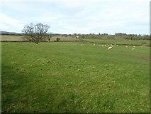 SO8259 : Farmland at Moseley by Philip Halling