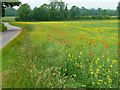 TL9999 : Farmland near Little Ellingham by Stephen Richards