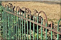 J3674 : Old green fence, Mersey Street, Belfast (March 2017) by Albert Bridge