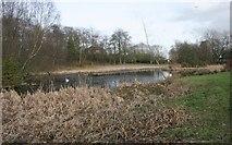 NS6168 : Wildlife pond, Springburn Park by Richard Sutcliffe