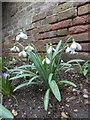 TQ3499 : Snowdrops  Myddelton House Garden, Enfield by Christine Matthews