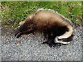 H3776 : Dead badger, Mullanatoomog by Kenneth  Allen