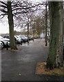 SX8966 : Path at the Willows by Derek Harper
