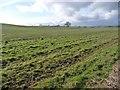 NZ1512 : Farmland, south side of Caldwell Beck valley by Christine Johnstone