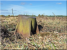 SU3401 : WWII Hampshire - RAF Beaulieu airfield: Signals Mortar (1) by Mike Searle