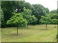 SU8484 : The Orchard, Bisham by Eirian Evans