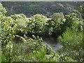 NH3735 : River Glass by Richard Webb