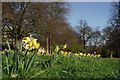 TQ2780 : Spring in Hyde Park by Peter Trimming