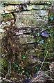 SP2608 : Benchmark on roadside wall near Johnsons Farm by Roger Templeman
