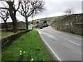 NO2507 : New Road, Falkland by Bill Kasman